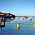 The Mylor Dolphin by Terri Waters