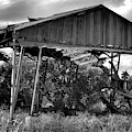 The Old Shed by Perry Correll