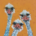 The Ostrich Sisters Sketch by Jani Freimann