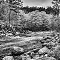 The Ouachita River Black And White by Kyle Findley