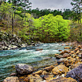 The Ouachita River by Kyle Findley