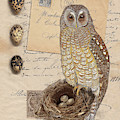 The Owl Nest And Eggs by Terry Kirkland Cook