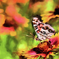 The Painted Lady by JC Findley