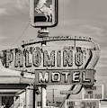 The Palomino Black And White by JC Findley