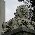 The Patterson Lion by Linda Stern