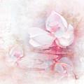 The Pink Lotus by Jai Johnson