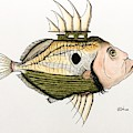 The Real John Dory by Graham Wallwork