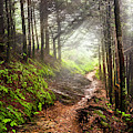 The Rocky Appalachian Trail by Debra and Dave Vanderlaan