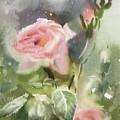 The Rose From A Misty Appalachia by Tatsiana Harbacheuskaya