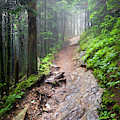 The Smoky Mountain Appalachian Trail by Debra and Dave Vanderlaan