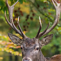 The Stag by Arterra Picture Library