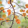 The Start Of Fall by Az Jackson