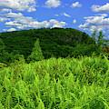 The Timp And Fern Meadow 2 by Raymond Salani III