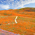 The Trail Through The Poppies by Endre Balogh