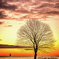 The Tree by Jeff Sinon