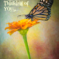Thinking Of You  by Harriet Feagin