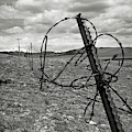 This Old Fence by Carl Young