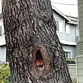 This Tree Sings Oprah by Cindy Greenstein
