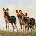 Three African Wild Dogs by David Stribbling