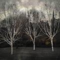 Three Birch Trees by Dave Bowman