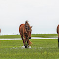 Three Horses Coming Straight On by Dan Friend