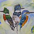 Three Kingfisher Birds - Painting By Ella by Ella Kaye Dickey