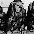 Three Wise Monkeys by Keystone