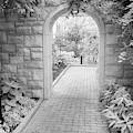 Through The Garden Gate by Terri Morris