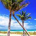 Through The Palm Trees At Fort Lauderdale Beach by John Rizzuto