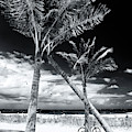 Through The Palm Trees At Fort Lauderdale Beach Monochrome by John Rizzuto