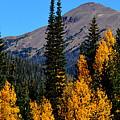 Thunder Mountain Aspens by Brian Goodbar