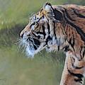 Tiger Portrait By Alan M Hunt by Alan M Hunt