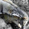 Timber Wolves Up Close by Jeannee Gannuch