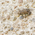 Tiny Frog by Jean Noren