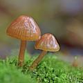 Tiny Fungi by Daniel Reed