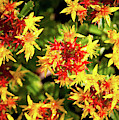 Tiny Red And Yellow Flowers by Anna Louise