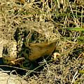 Toad At The Park by Kae Cheatham