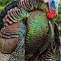 Tom Turkey Dancing by Dale Kauzlaric