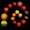 Tomatoes by Photograph By Magda Indigo