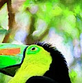 Toucan Corner by Alice Gipson