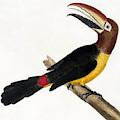 Toucan by European School