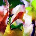 Toucan Kewl by Alice Gipson