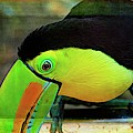 Toucan On My Shelf by Alice Gipson