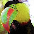 Toucan Stare by Alice Gipson