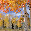 Touch Of Fall by Chad Dutson