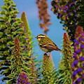 Townsend's Warbler - 3 by Christy Pooschke