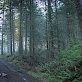 Traveling Oregon Coastal by Bill Posner