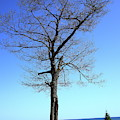 Tree And Great Lake by Frank Romeo