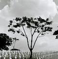 Tree And Sacrifice by Shaun Higson