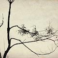 Tree Branches IIi by David Gordon